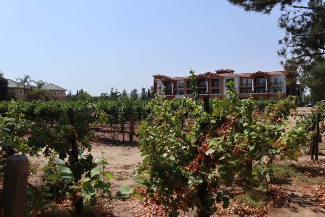 Vineyards at South Coast Resort and Spa in Temecula, Southern California's wine country