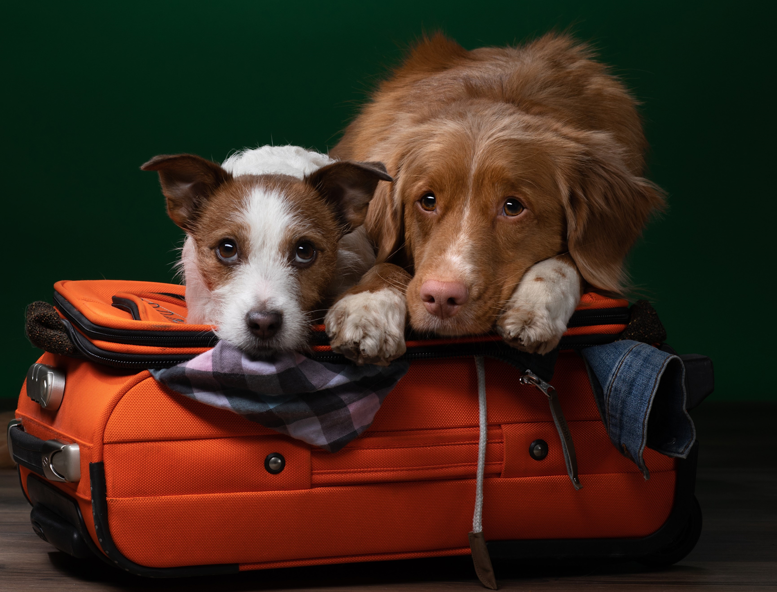 Two dogs give a sad look towards the camera as they lay on top of a partially-packed suitcase.