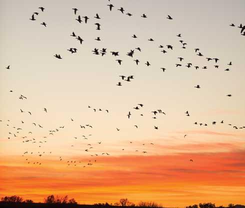Ft Prepareforliftoff Bosquebirds