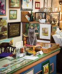 Shop Cat Zane Grey