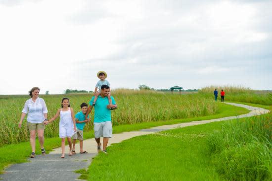 Emmenez la famille et explorez la passerelle des marais.