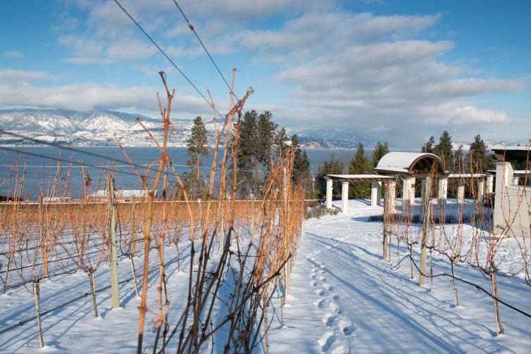 Winter Wine Touring at CedarCreek Estate Winery