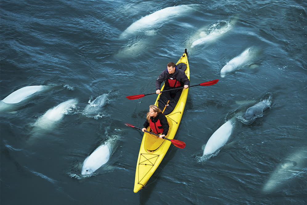 Beluga Week from Travel Manitoba