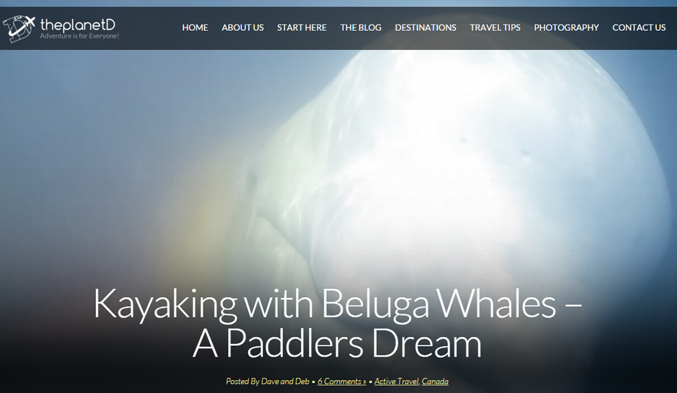 The Planet D: Kayaking with Beluga Whales