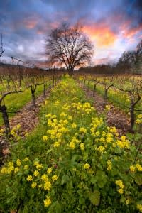 Napa Valley Gift Guide - fine art photograph by Olof Carmel