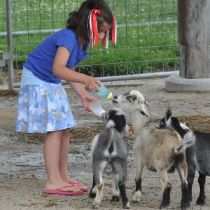 Deanna Rose Goats
