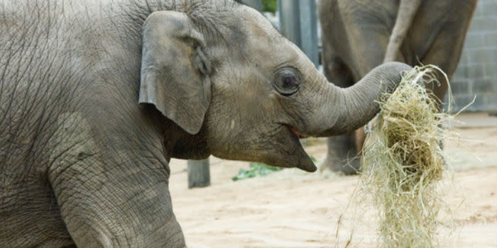Elephant at the Houston Zoo