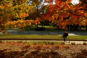 Fall Family Fun in Greater Lansing