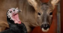 Michigan Deer and Turkey Expo in Lanisng, Michigan
