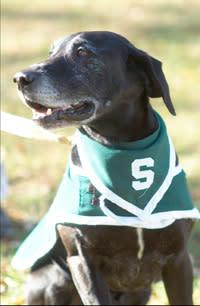 Zeke the Wonder Dog MSU Spartans