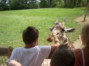 FW zoo giraffe 07-13