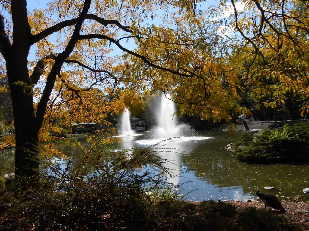 Twin fountains in the Zoo's pond sparkle in the autumn sunlight.