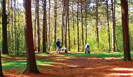 Disc Golf in Woods
