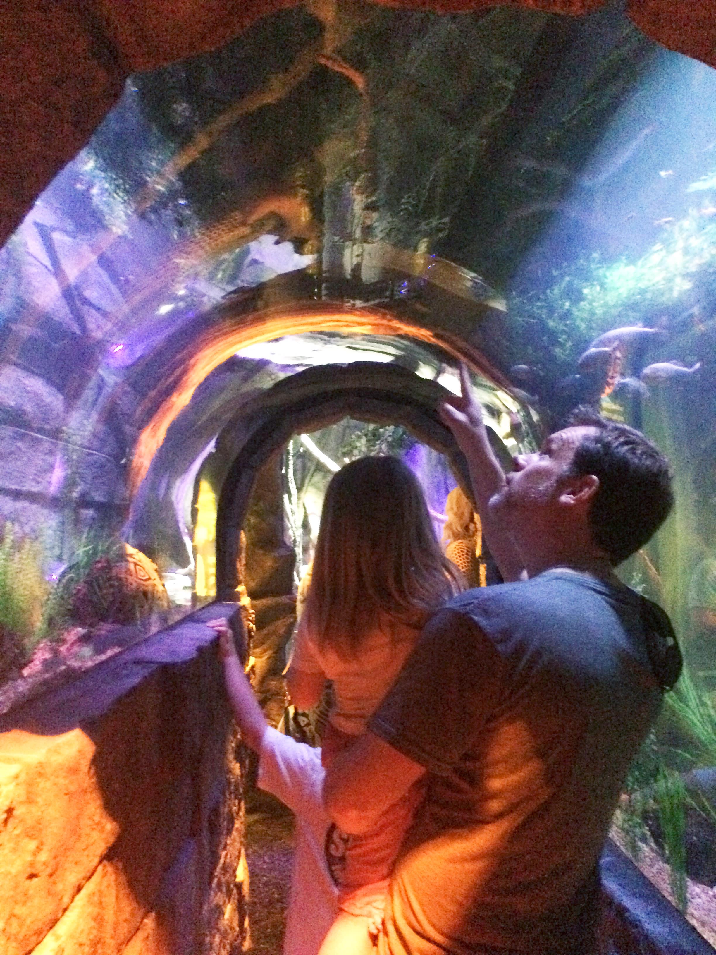 the 8 ft. long piranha tunnel
