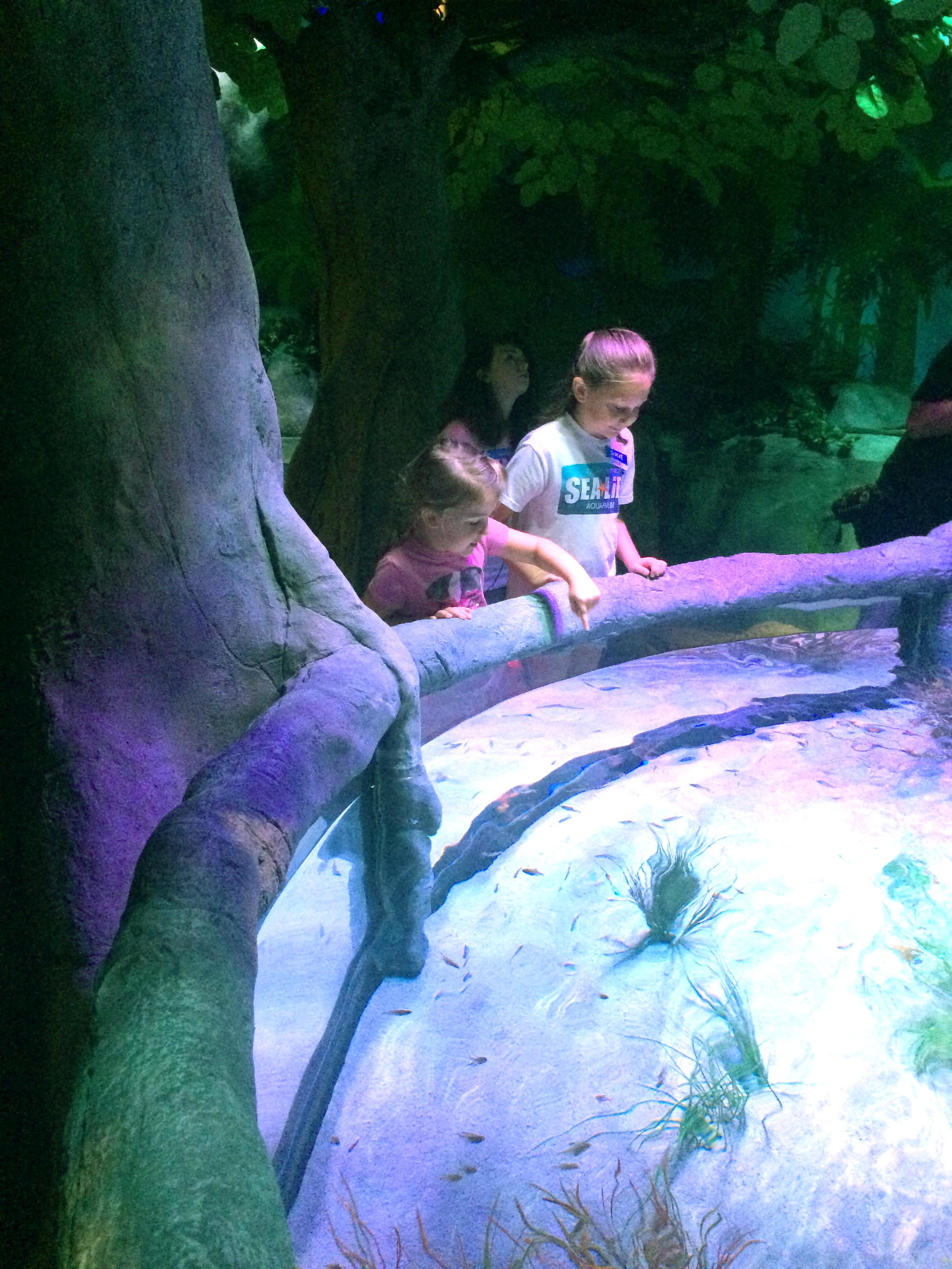 Rainforest Adventure freshwater tanks