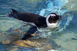 Lehigh Valley Zoo (9)