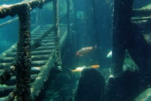 Dutch Springs is the largest freshwater scuba diving facility