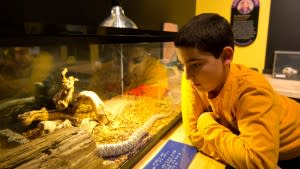 Discovering reptiles at Da Vinci Science Center