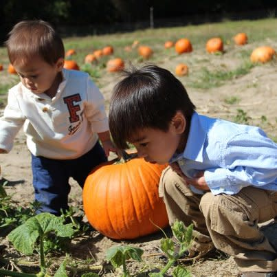 Boys in a Pumpkin Patch