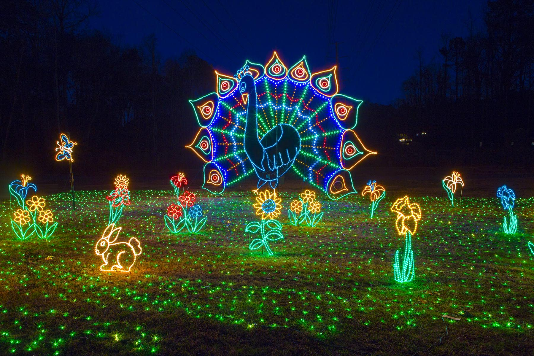 Holiday Lights on the River at Saluda Shoals Park in Columbia, SC