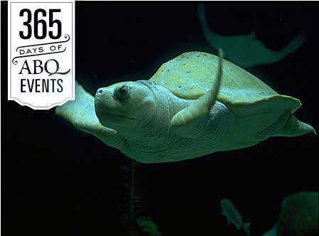Sea Turtle Awareness Day - VisitAlbuquerque.org