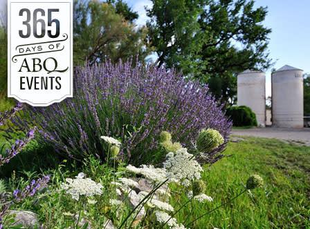 Lavender 101 - VisitAlbuquerque.org