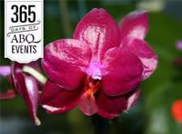 Orchid Show - VisitAlbuquerque.org