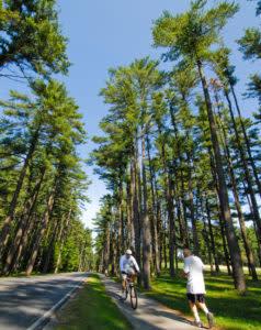 statepark-avenueofpines