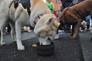 chowderfest is dog friendly