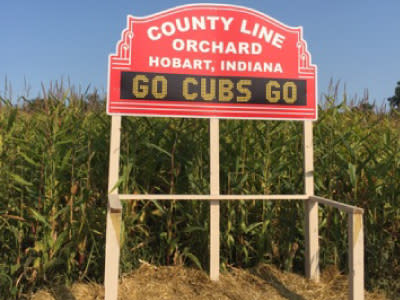 Cubs corn maze - County Line Orchard