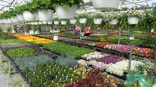 Kal Bro Farms rows of flowers