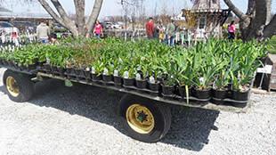 Kal-Bro Farms trailer of perennials