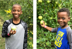 Picking apples in the orchard