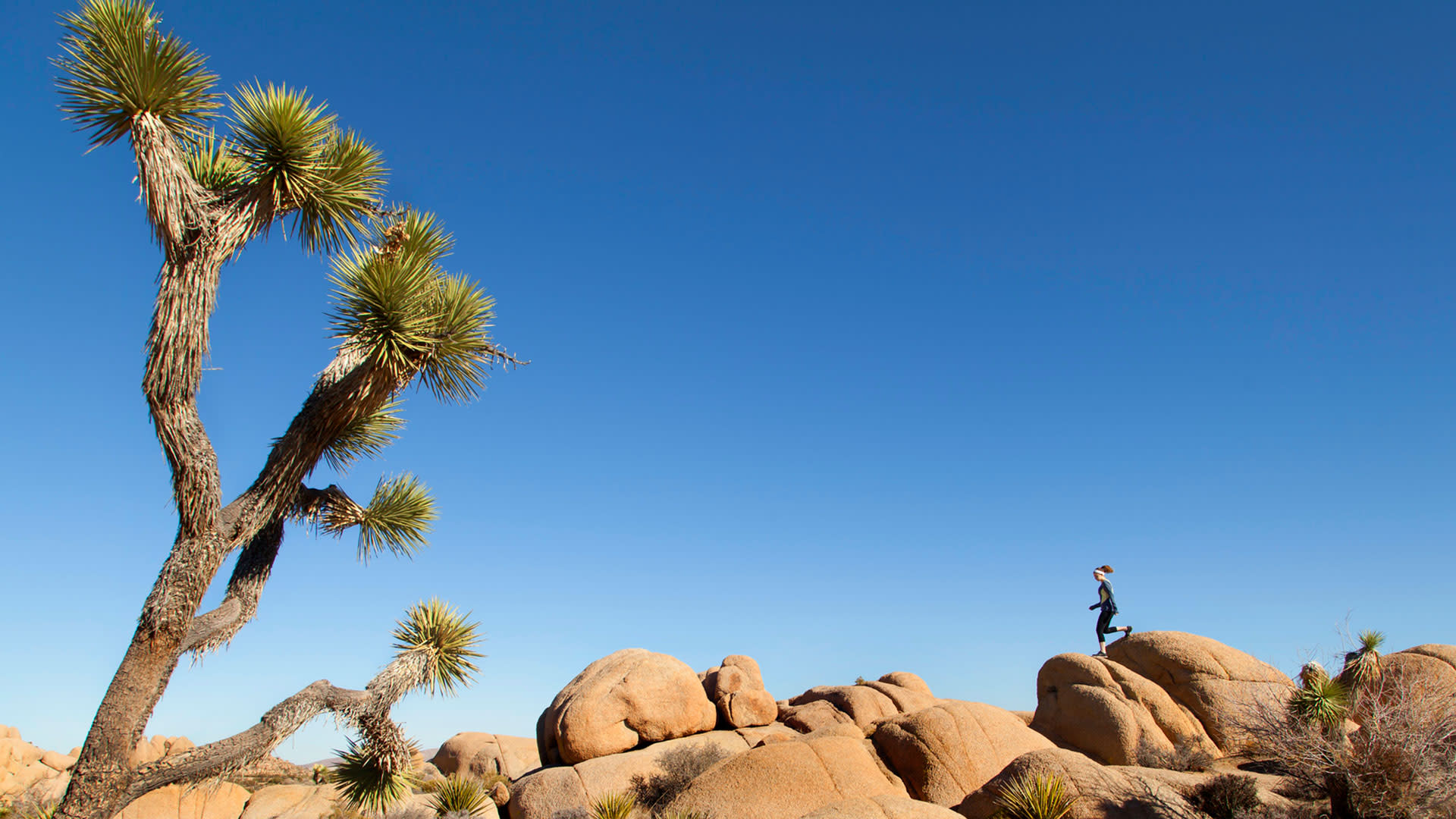 health and wellness in joshua tree national park