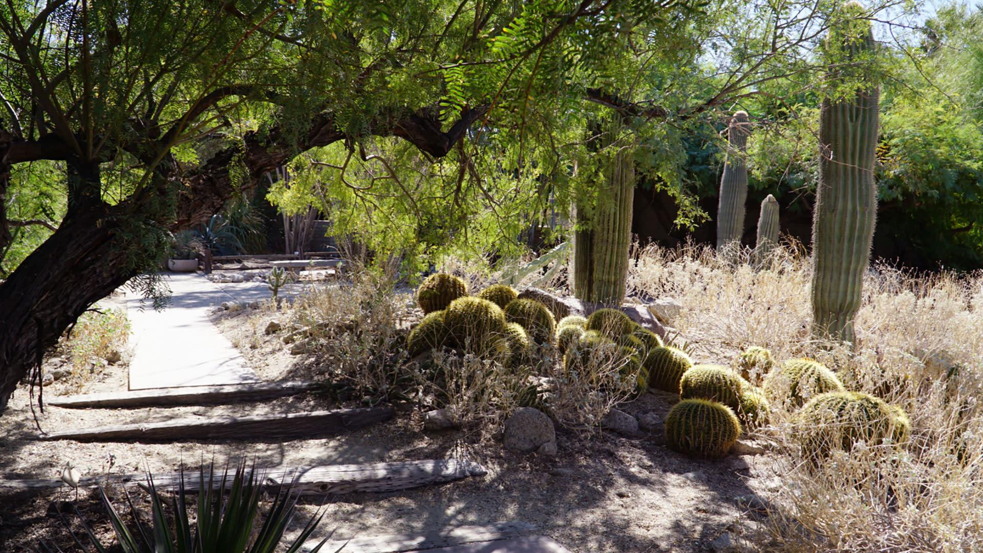 the living desert palm desert