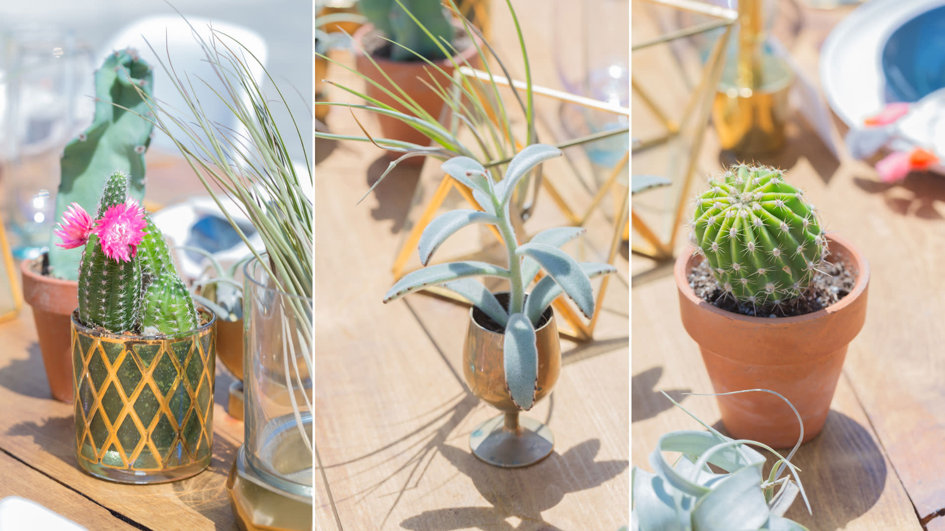 greater palm springs birthday party centerpieces