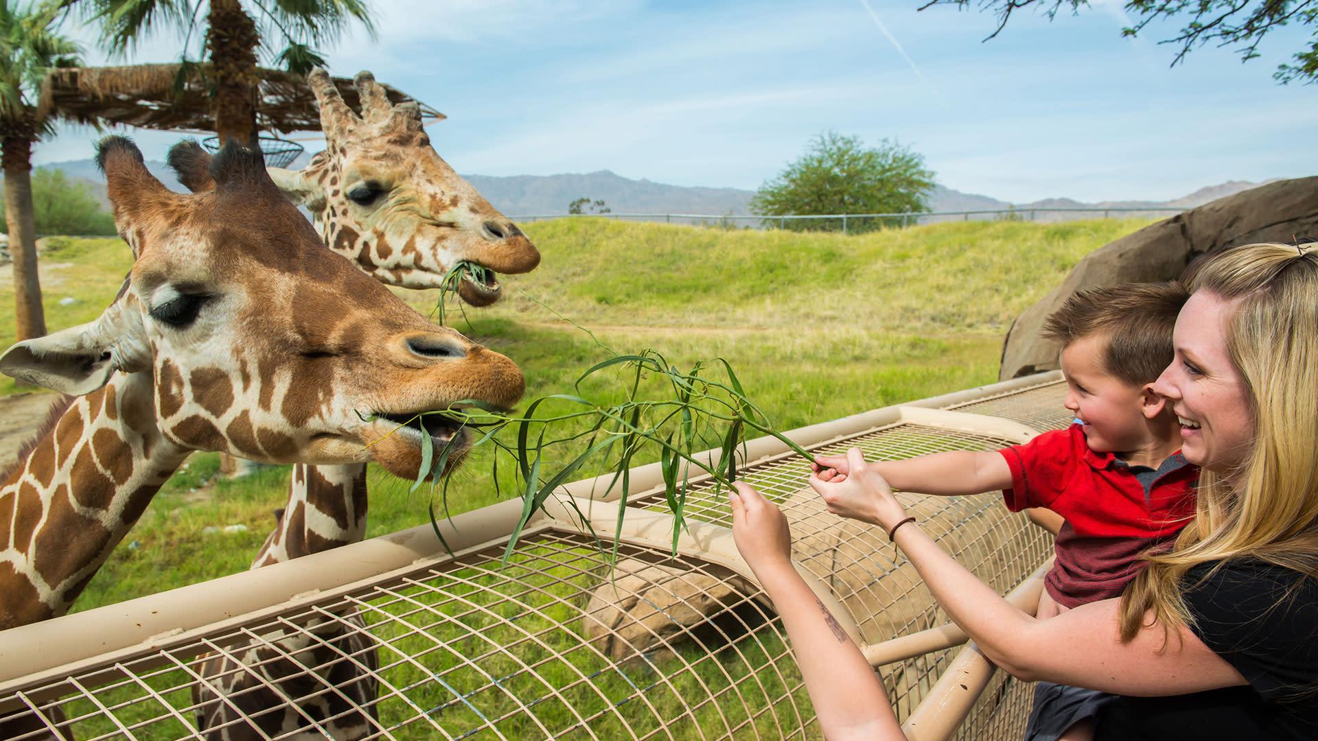 year of the giraffe living desert