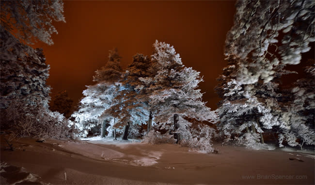 Brian Spencer - Trees Headed Up to Sandia Crest