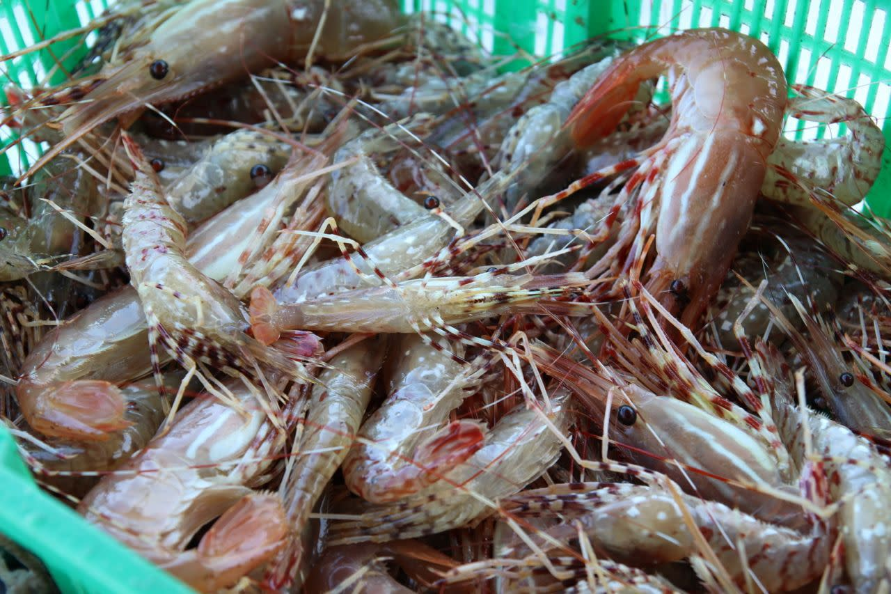 spot-prawn-shanghai-morning051