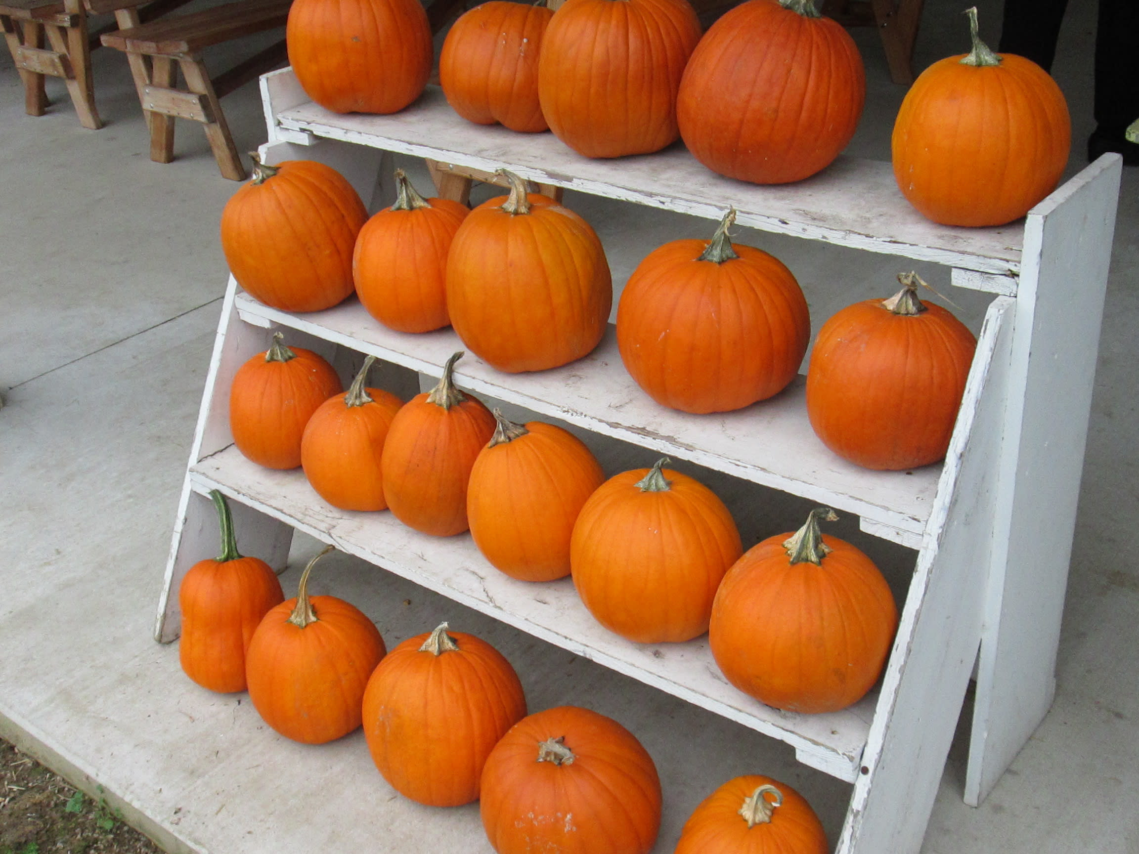 Find the perfect pumpkin for carving at Flinchbaugh's Orchard & Farm Market