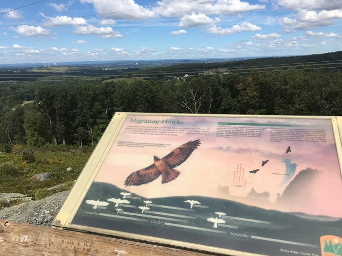 Bring your binoculars for a hawk watch at Rocky Ridge County Park.