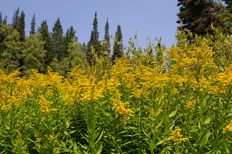 View of Goldenrod from the trail