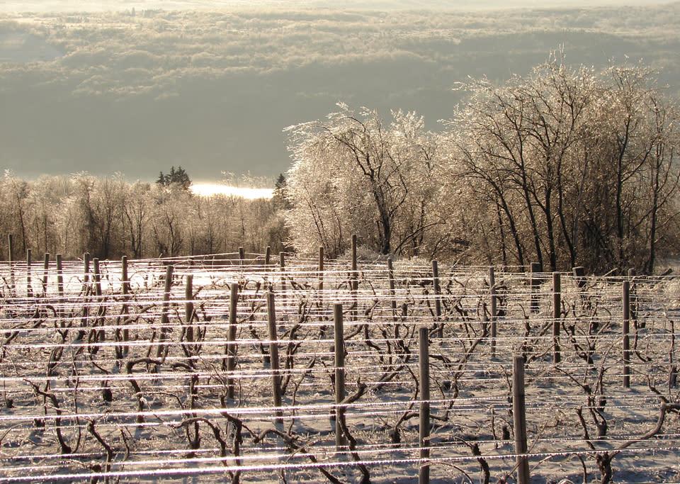 Winter Vineyard and Lake View courtesy of Jake Cornelius