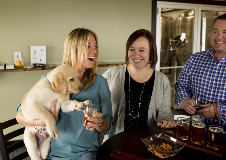 Dog Friendly Steuben Brewing Company courtesy of Stu Gallagher