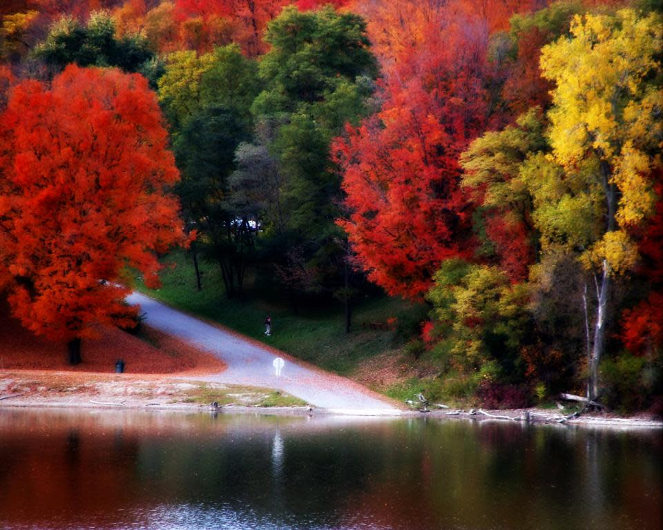 Fall Foliage at Kanakadea Park by Shelly McDaniels
