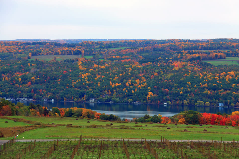 Fall View from Heron Hill Winery by Kathy Wesserling