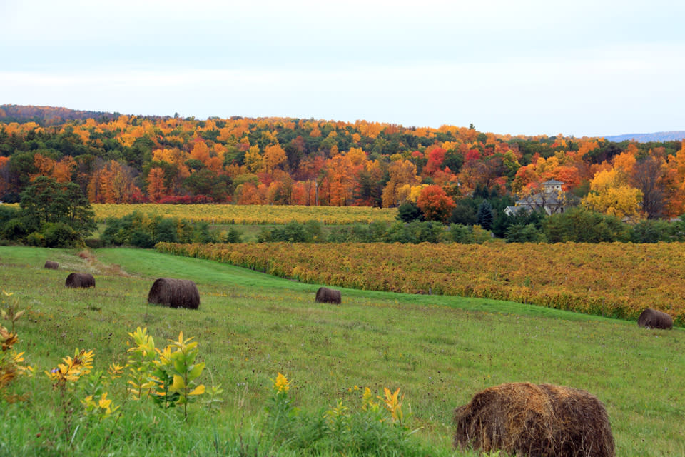 Fall Foliage in Corning and the Southern Finger Lakes by Kathy Wesserling