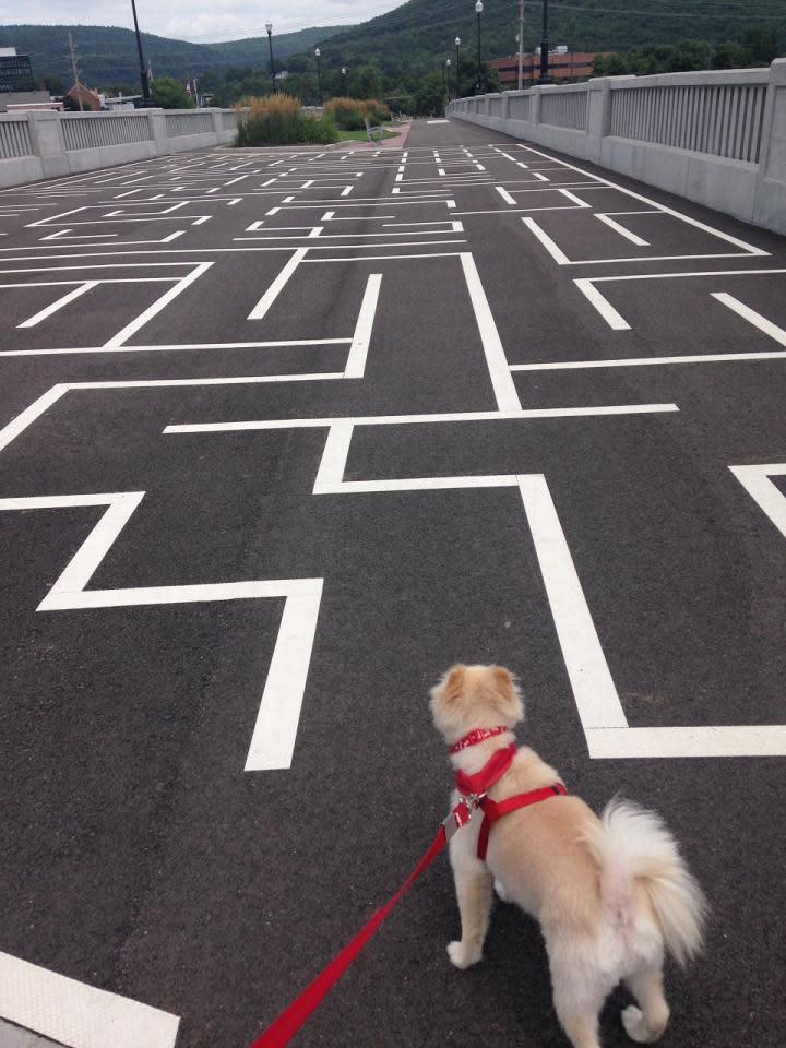 Kosar strategizing his path through the maze on The Centerway