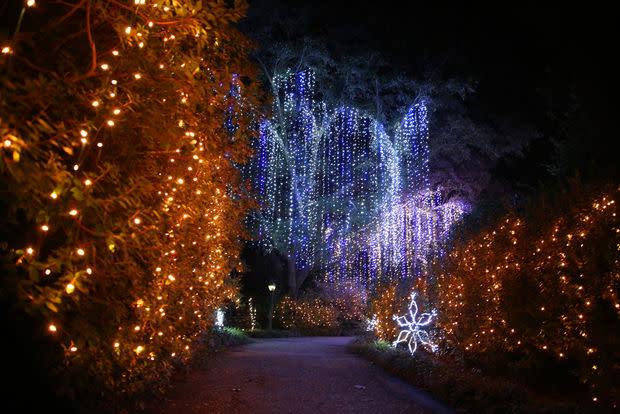Magic Christmas in Lights