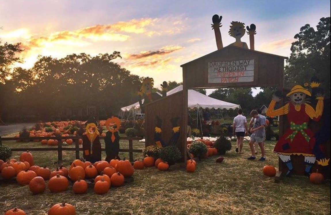 dauphin-way-pumpkin-patch